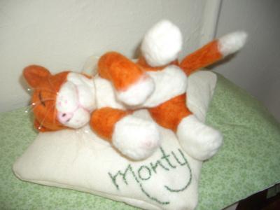 Monty the sleepy ginger cat